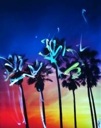 Pete Kasprzak: Venice California Multi Palms 2