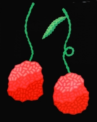 Will Beger: Black Cherries