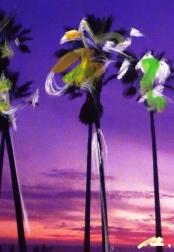 Pete Kasprzak: Palms #1