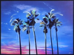 Pete Kasprzak: California Blue Palms
