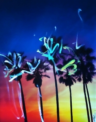 Pete Kasprzak: Venice California Multi Palms 2
