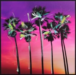 Pete Kasprzak: Venice California Pink Palms