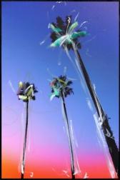 Pete Kasprzak: Santa Barbara 3 Palms