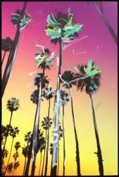 Pete Kasprzak: Santa Barbara Over Palms