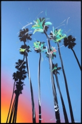 Pete Kasprzak: Santa Barbara Sky High Palms