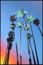 Pete Kasprzak: Santa Barbara Sky High Palms