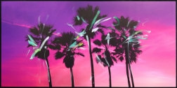 Pete Kasprzak: Venice California Pink Palms II